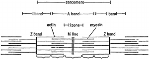 Diagram of the system which contains in a half sarere