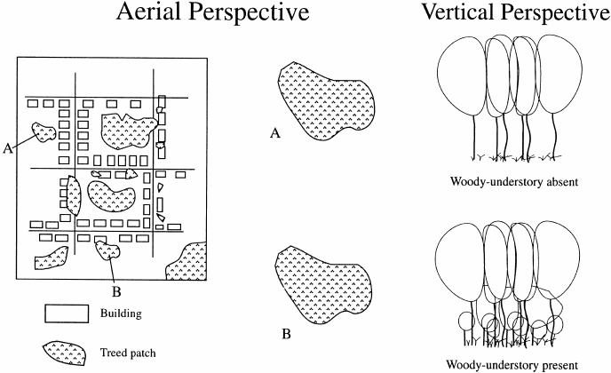 A representation of one aspect of greenspace heterogeneity