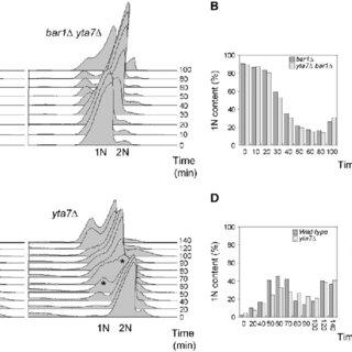 (PDF) Saccharomyces cerevisiae Yta7 Regulates Histone Gene