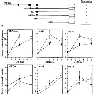 CM preferentially activates nuclear NF- ␬ B p50 expression