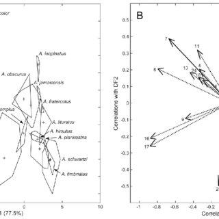(PDF) Cranial Differentiation of Fruit-Eating Bats (Genus