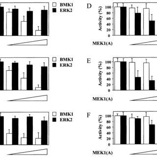 Activation of BMK1 by extracellular stimuli. ( A ) CHO-K1