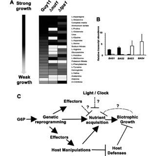 (PDF) Why No Feeding Frenzy? Mechanisms of Nutrient
