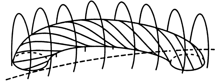 ÈSchematic model of a long twisted Ñux tube held down by