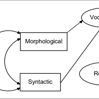 (PDF) The Relation of Morphological Awareness and