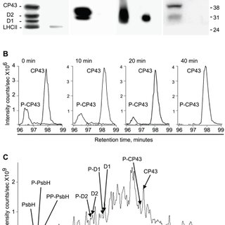 Deficiency in light-induced phosphorylation of PSII in the