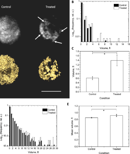small resolution of biological validation study using the mitochondrial fission inhibitor 8 bromo camp in mouse macrophage