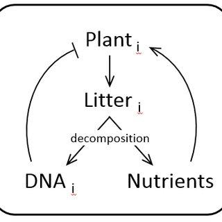 (PDF) CARÉ, R. & FEVEREIRO, P. (2015). EXPLAINING PLANT