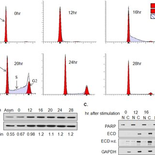 (PDF) A novel interaction of ECD protein with R2TP complex