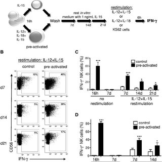 (PDF) Cytokine activation induces human memory-like NK cells