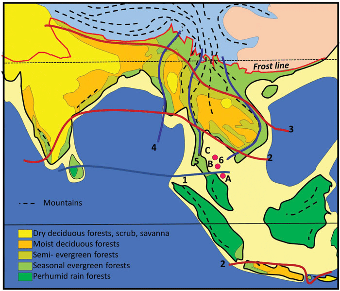 The montane wet temperate forests, himalayan moist temperate forests and himalayan dry temperate forests. Vegetation Map Of South And South East Asia Simplified From Ashton Download Scientific Diagram