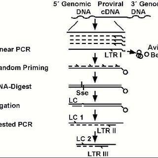(PDF) Polyclonal long-term repopulating stem cell clones