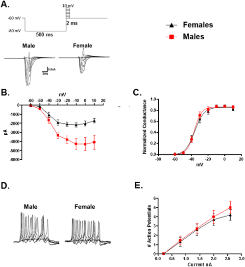 small resolution of comparison of voltage gated sodium channels in male and female trpm8 expressing trg neurons