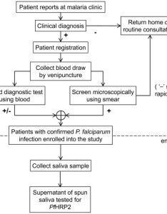 Enrollment of patients flow chart showing the process for collection and also rh researchgate