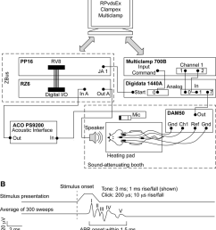 schematic of the abr setup a wiring diagram rats were positioned in a sound attenuating booth on a direct current temperature controlling heating pad  [ 850 x 971 Pixel ]