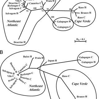 (PDF) Sympatric speciation by allochrony in seabird