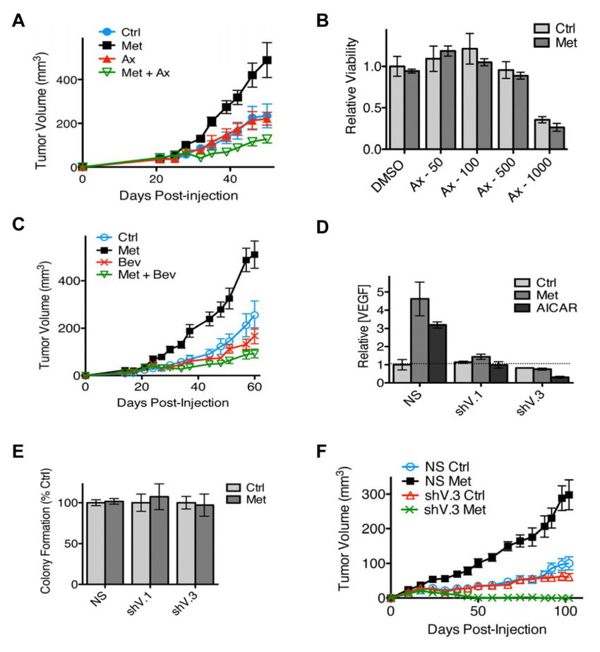 Metformin and VEGF-A pathway inhibition induce synthetic