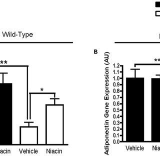 (PDF) Niacin Increases Adiponectin and Decreases Adipose