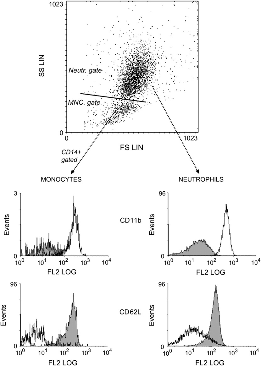 hight resolution of flow cytometric dot plot of blister fluid illustrating the gating strategy used to discern extravascular neutrophil