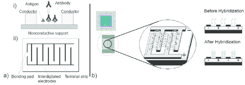 a) i) Immunosensor for the in-plane impedance measurements