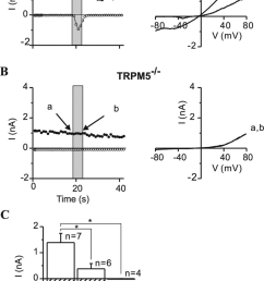 activation of a trpm5 dependent current in taste receptors cells by elevation of intracellular ip [ 850 x 1377 Pixel ]