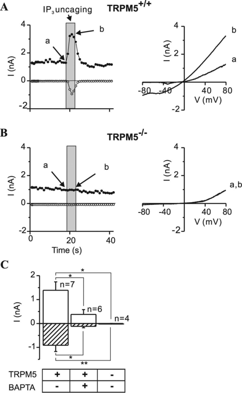 small resolution of activation of a trpm5 dependent current in taste receptors cells by elevation of intracellular ip