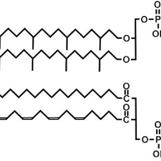 (PDF) Michell RH.. Inositol and its derivatives: their