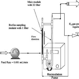 (PDF) Evaluation for Biological Reduction of Nitrate and