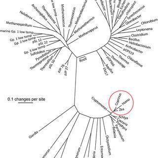 (PDF) Advances in biodiversity: Metagenomics and the