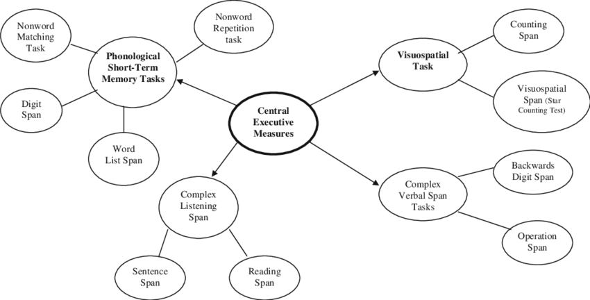 A schematic representation of the different working memory