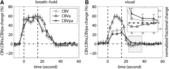 The average time courses of relative blood volume changes