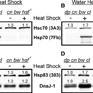 Microarray analysis reveals candidate chaperone genes that