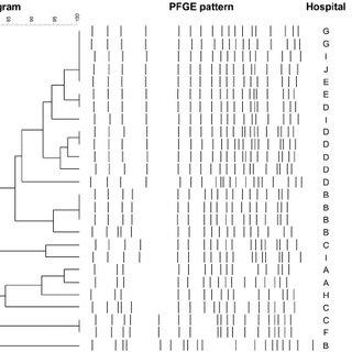 (PDF) Molecular Characterization of Klebsiella pneumoniae