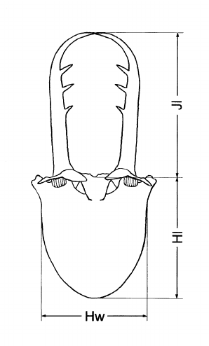 Technique of measurement of larval head. Hl = length of