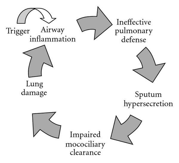 The pathophysiology of bronchiectasis the inflammatory