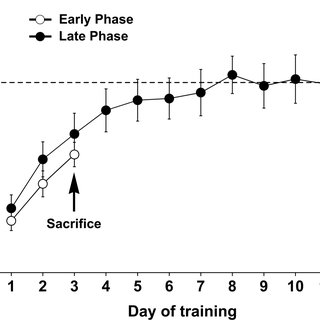 (PDF) Motor Skill Learning Is Associated with Phase