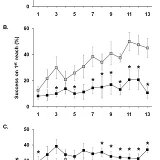 SHRs show increased locomotor and rearing activity. Naïve