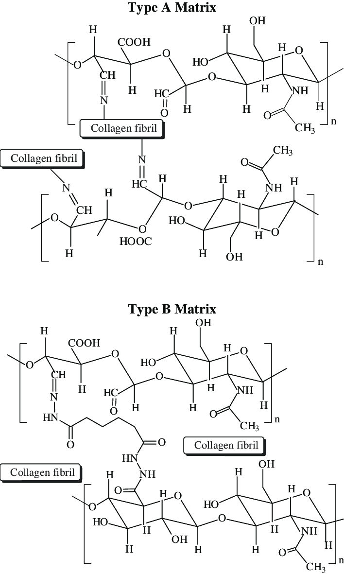 hight resolution of schematic representations of the chemical reactions involved in the formation of composite collagen hyaluronic acid