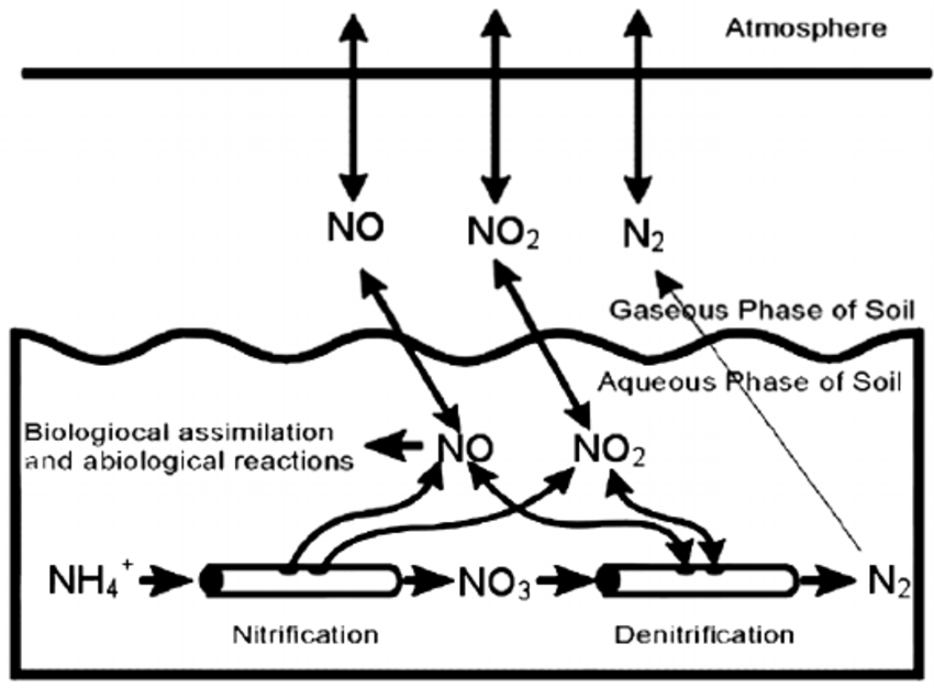 """4. The """"hole-in-the-pipe"""" conceptual model of N gas fluxes"""