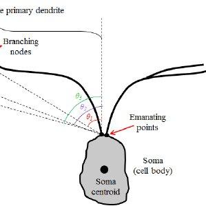 . 3D confocal image stacks of retinal horizontal neuron