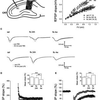 (PDF) Long-term fluoxetine treatment induces input