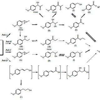 Postulated metabolic pathways of trans-anethole by