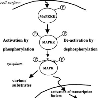 (PDF) Hydrogen peroxide and nitric oxide as signaling