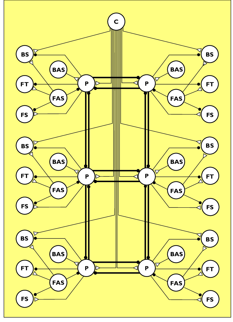 medium resolution of schematic diagram of a distributed neural network for the control of locomotion excitatory connections are