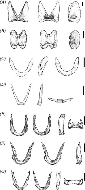 Taxonomy, Ecology And Behaviour Of The Cirrate Octopods