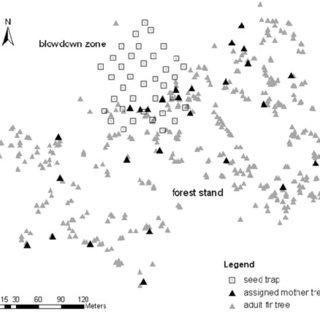 (PDF) Local seed dispersal in European silver fir (Abies