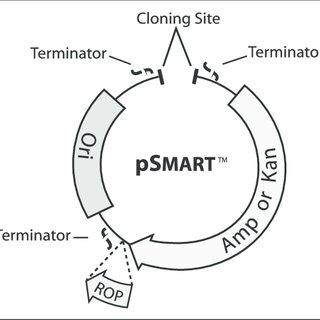 1. Advantages and disadvantages of pUC-type plasmids