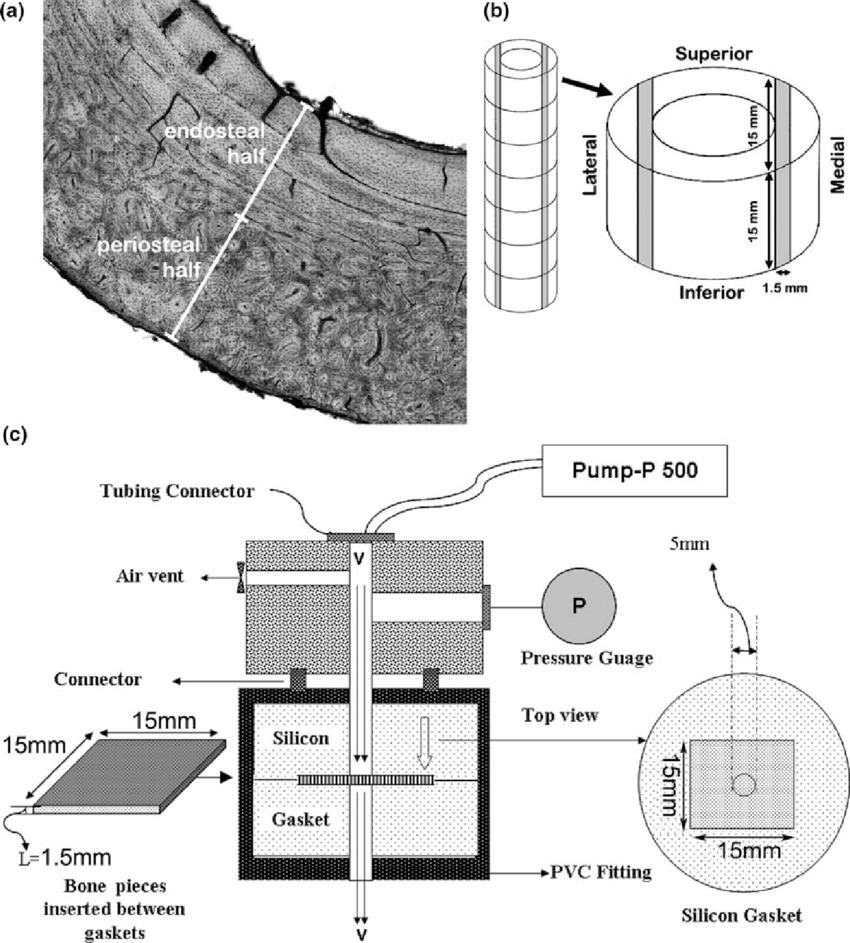 medium resolution of selection of bone tissue regions and the means to measure hydraulic permeability of cortical bone