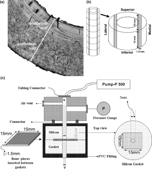 small resolution of selection of bone tissue regions and the means to measure hydraulic permeability of cortical bone