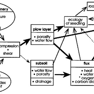 Relationships between soil compaction and root health; a